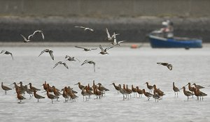 Waders in the Thames Estuary