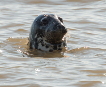 Canary Wharf is London's seal watching hotspot