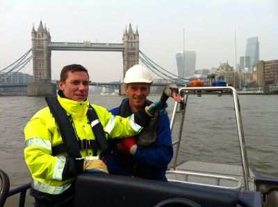 PLA staff Ryan Pearce and Lawrence Kent reassure the rescued swan by Tower Bridge